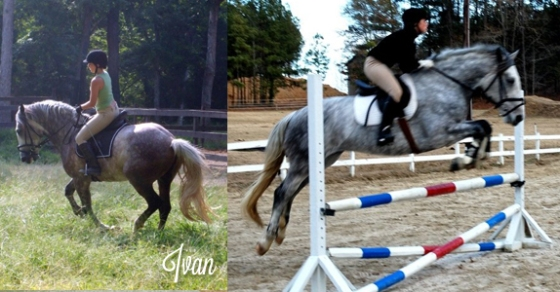Ivan (the sometimes terrible) dressage and jumping