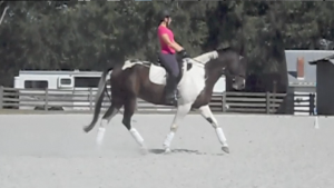 Reins getting a little long in the trot, but happier here with my leg-hip-shoulder alignment
