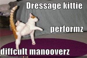 Cat humor + Dressage Meme... you're welcome.