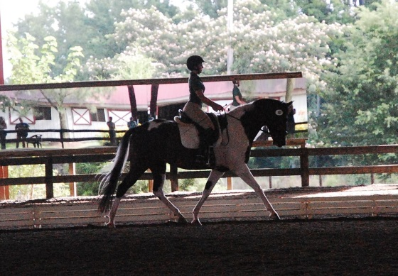 At a dressage show over the summer