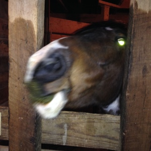 Rabid green foamy pony monster wants more alfalfa cubes!