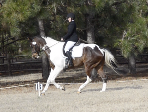 Screenshot from dressage