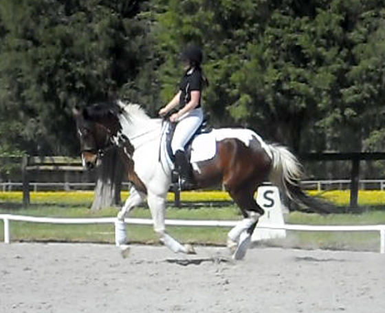 Working on roundness in the canter