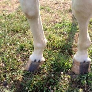 Barefoot pony...
