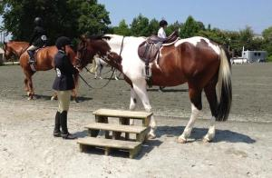 Foster in his hunter get up (i.e, cross country saddle with no pad) and me in the full hunter outfit- FS jods and all!