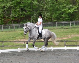 Another photo from FENCE, Ivan at a dressage show
