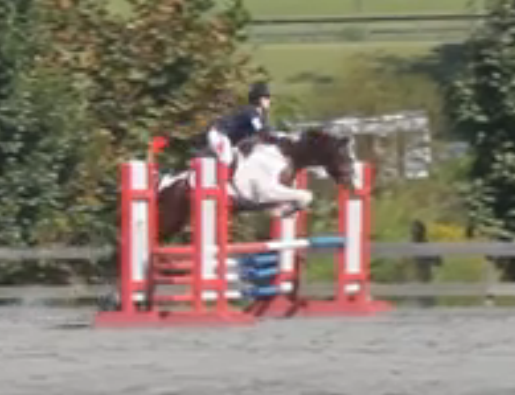 FENCE showjump 6
