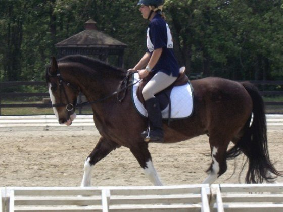 New Millenia, New Discipline! Dressage on her own Bud Light