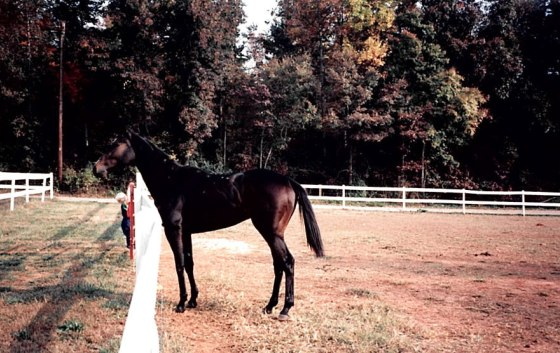 OK, so not of her, but of one of the OTTB's, and my brother hanging on the gate
