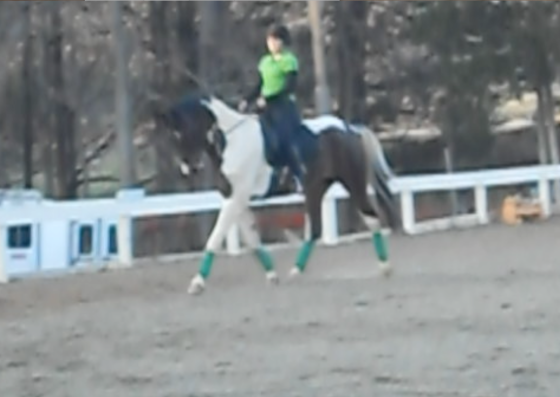 Learning self carriage- better hind end muscling will only help!