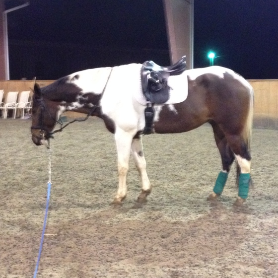 Warning: Crazy horse lunging here