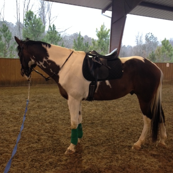 Wild man (not really) got lunged on Saturday to see how he was feeling. He was feeling like he would prefer to stand.