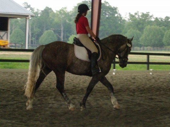 ...since it helps your leg elongate around the horse