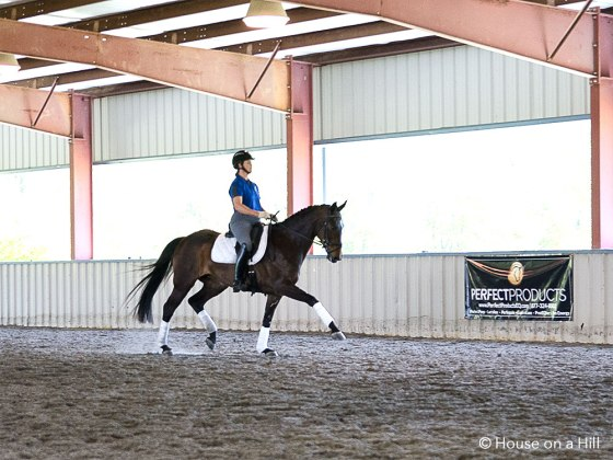 Eliza demonstrates the Extended trot