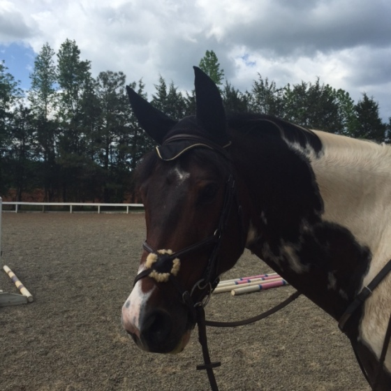 Looking derpy with his noseband off center