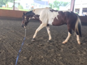 seriously, horse loves to stretch