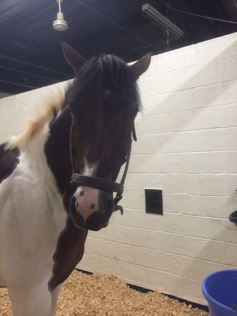 My horse has a powerful glare when he wants to
