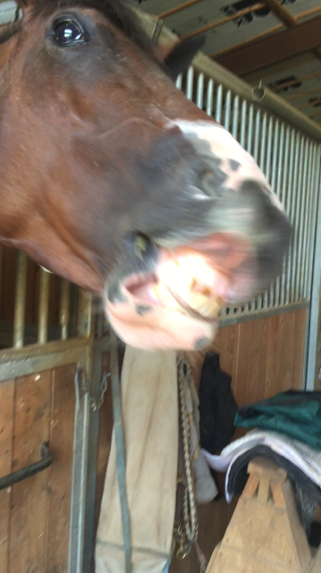 Day 3 of teaching the horse to smile. He cracks me up!