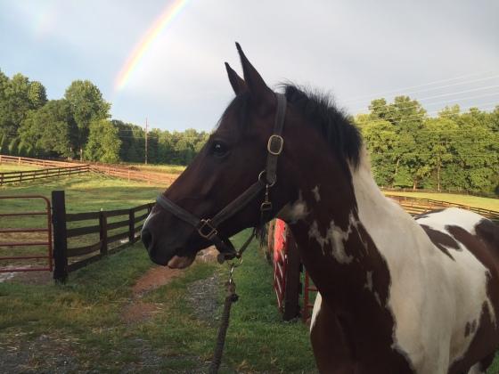 rainbow Foster 2
