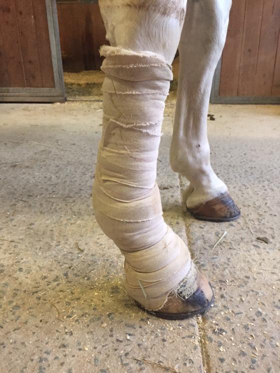 old bandage