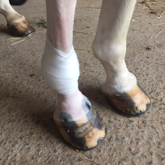 More casting wrap on the still-pink pony leg