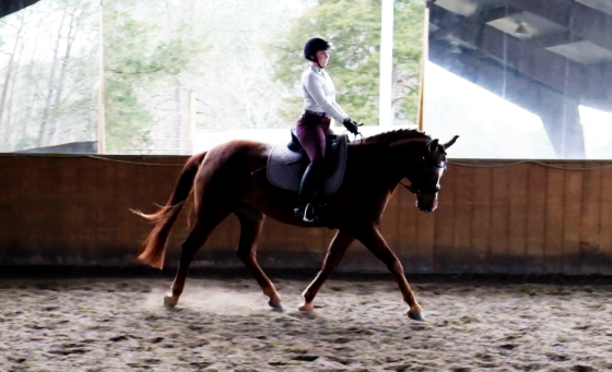 Darcy dressaging