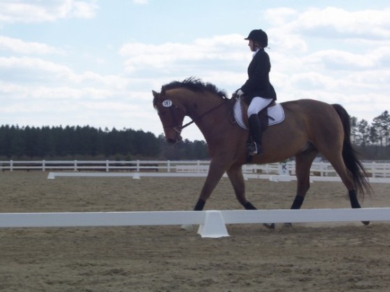Riding a horse of this type in Intercollegiate dressage, where many Made but Maintenance horses find themselves