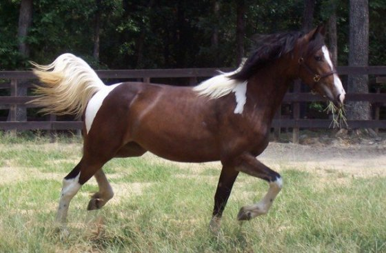 One of my babies as a yearling
