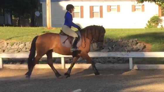 Yay new media! Riley showing off his newly acquired dressaging skillz