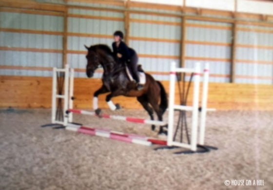 kentucky horse 1