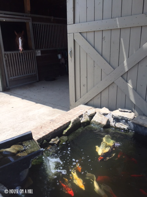 Barns with Koi ponds. Because Kentucky.